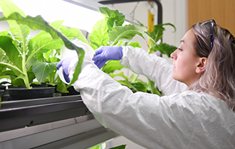 Learning to Think as Researchers: Students Clone, Genetically Modify Plants to Clean Environmental Contaminants